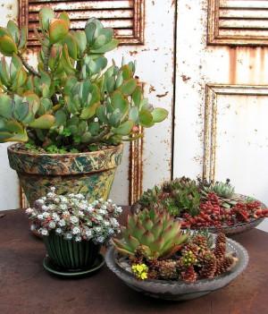 dish gardens