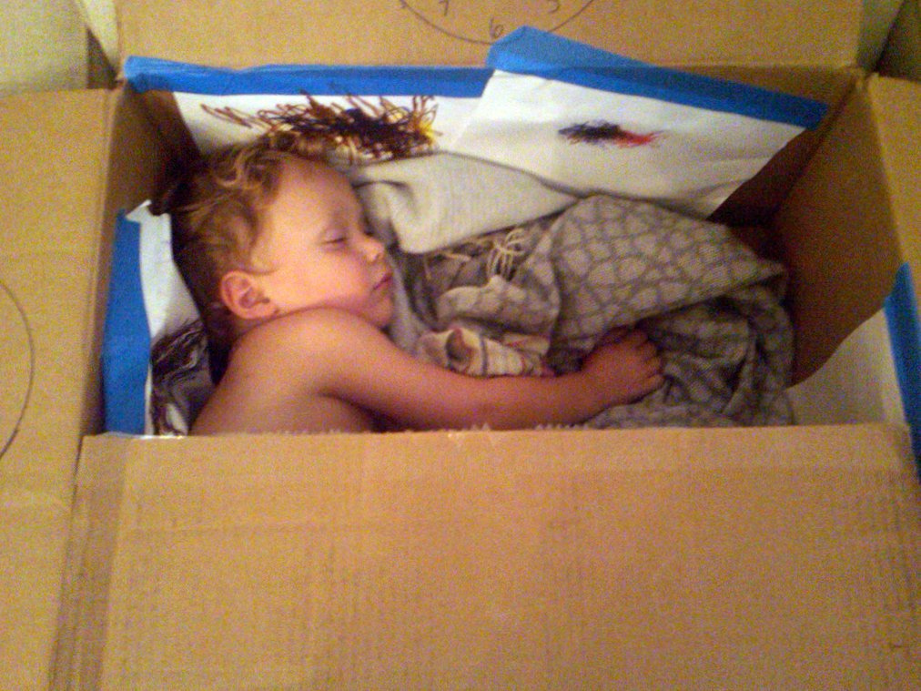 Luc asleep in a cardboard box